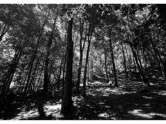 Photograph 1